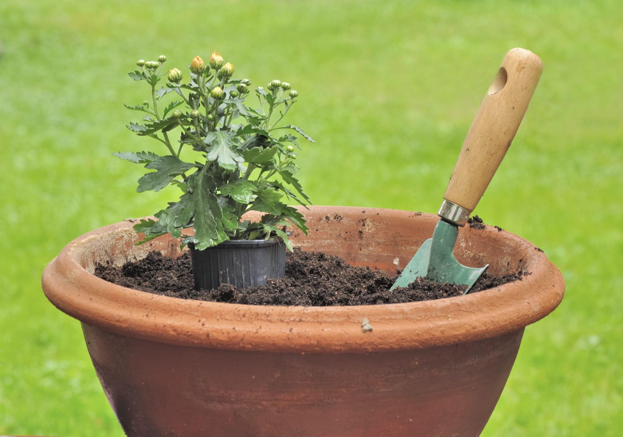 Vasi con gli scarti organici, facili da smaltire. Non inquinano e nutrono molto bene le piante