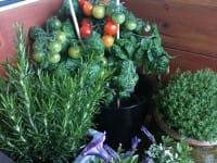 Pomodori ed erbe aromatiche