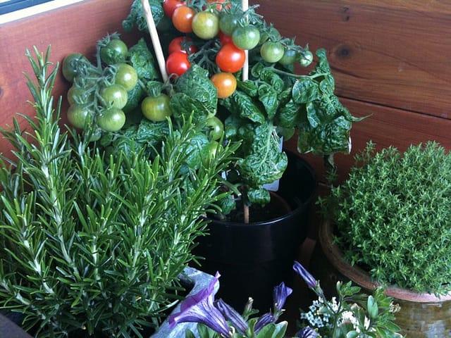 Come coltivare l 39 orto in casa non specare - Creare un giardino sul balcone ...