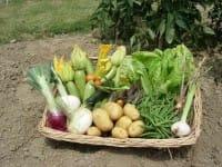 Orto in casa a febbraio: ecco i lavori e le semine da fare
