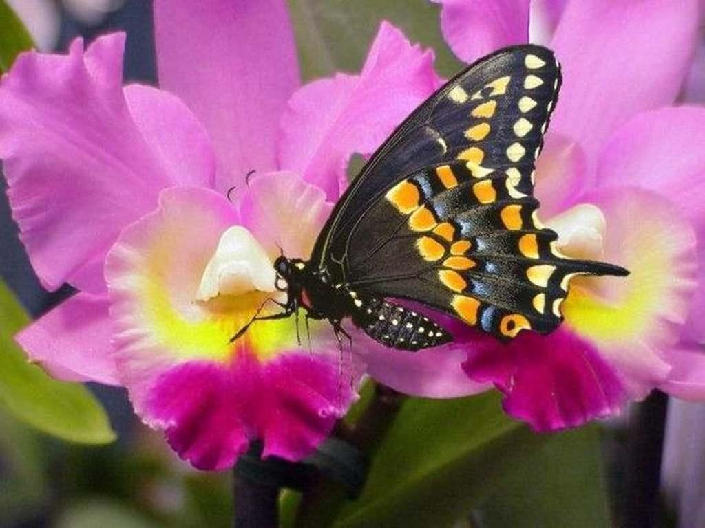 Natura in pericolo scomparso il 60 delle farfalle non for Immagini per desktop natura
