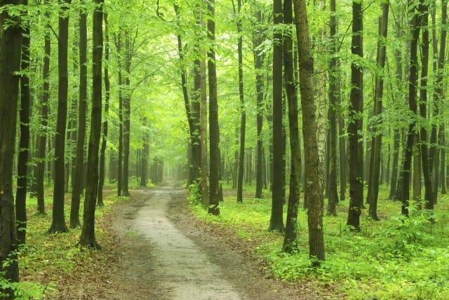Vuoi un bosco? In Liguria puoi affittarlo, gratis, dalla regione
