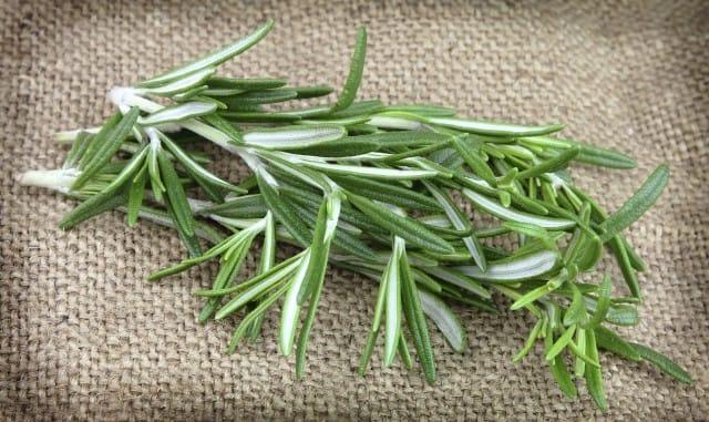 Effetti benefici del rosmarino: il suo aroma favorisce la concentrazione e memoria