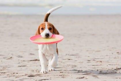 Risparmiare sulle spese per il cibo degli animali domestici: un piccolo vademecum