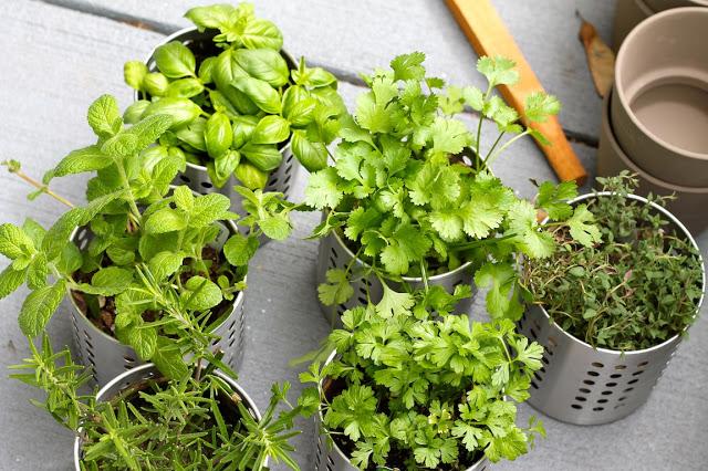 come coltivare l'orto in casa - non specare - Piccolo Giardino Sul Balcone