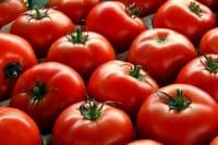 Nuove frontiere della bioplastica: le scarpe fatte con i pomodori