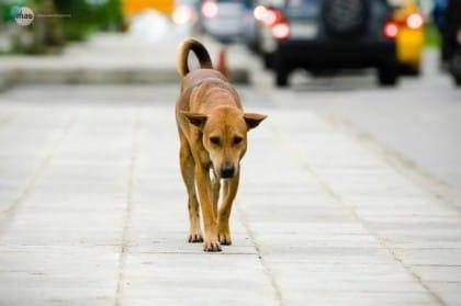 Cani abbandonati in autostrada: chi chiamare per soccorrerli e metterli al sicuro