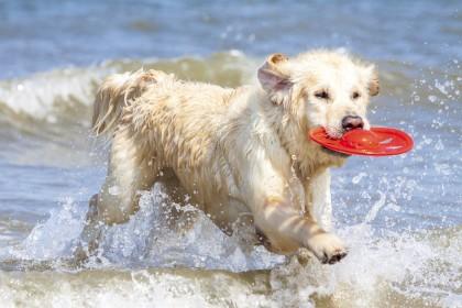 Dove andare in vacanza con il cane: tutte le informazioni utili