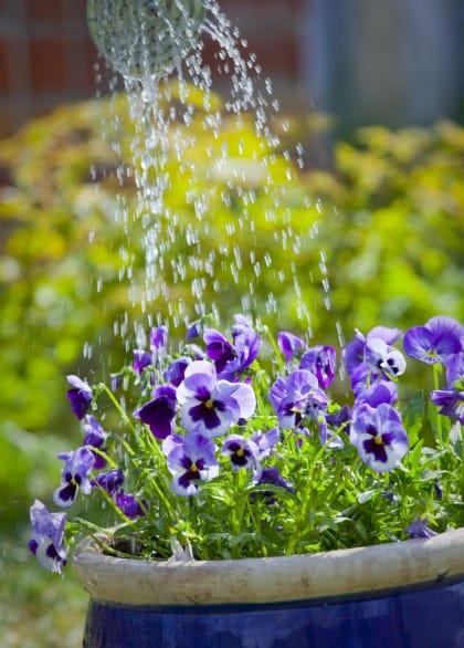 Come annaffiare le piante senza sprecare acqua