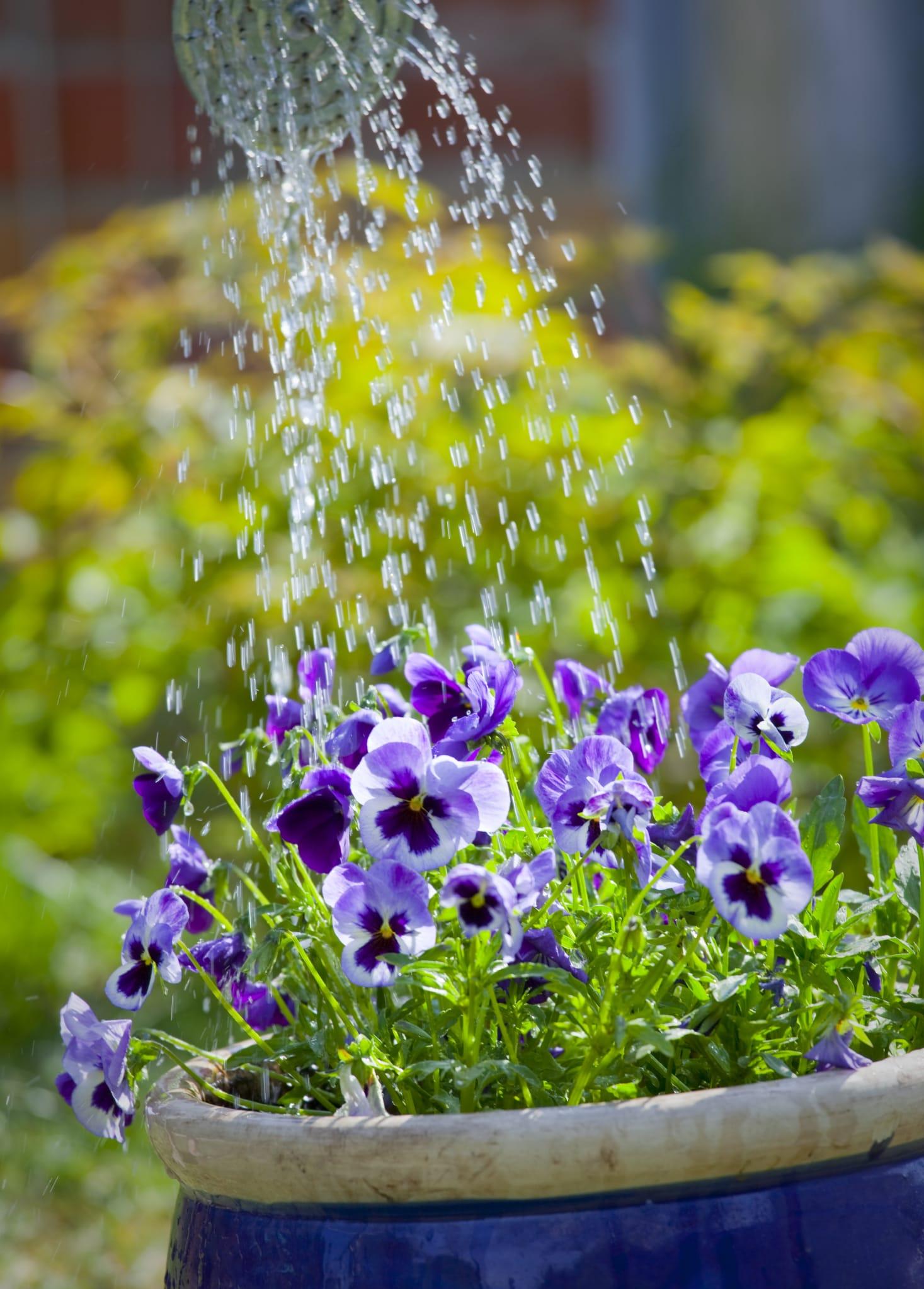 Come annaffiare le piante senza sprecare acqua for Annaffiare le piante