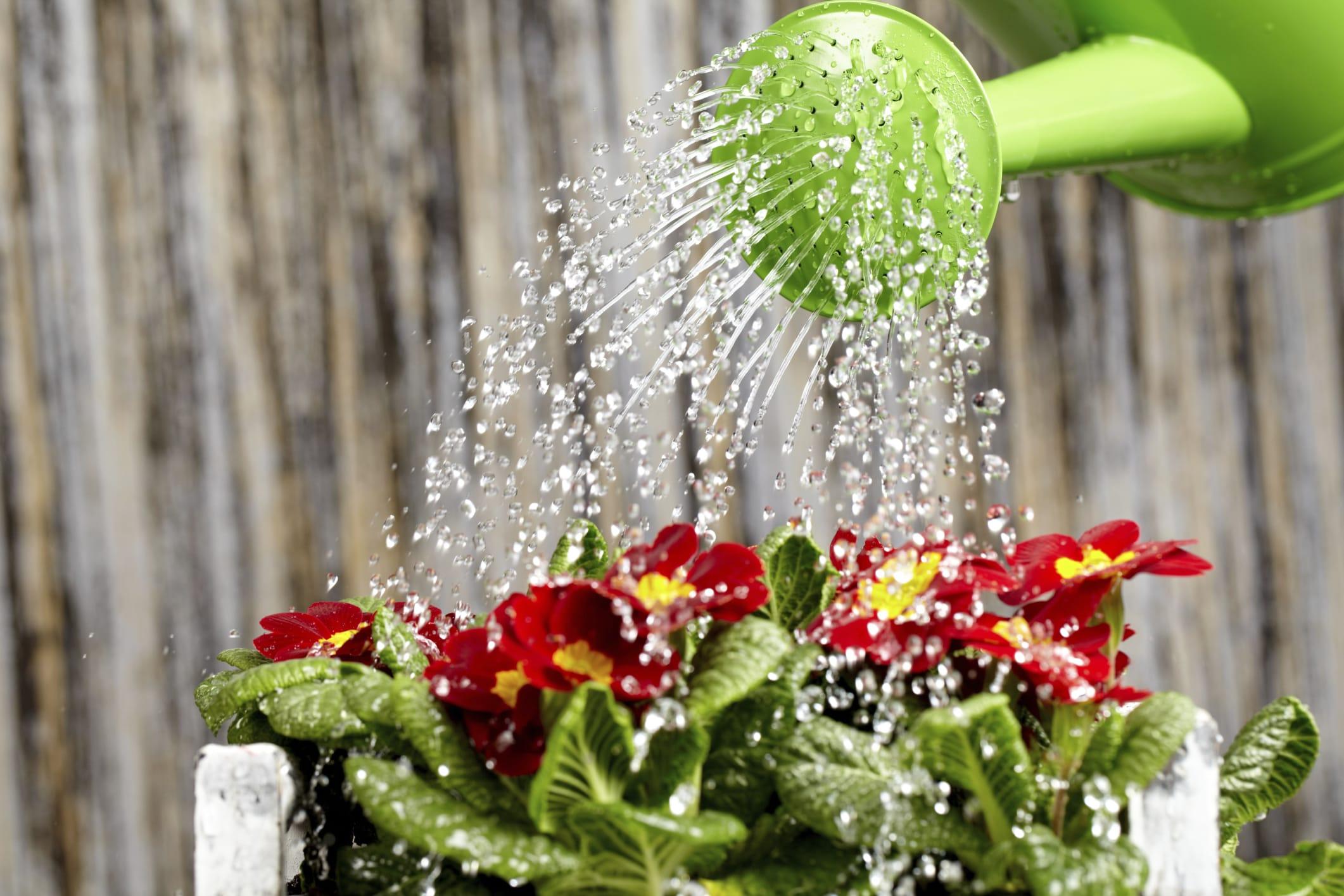 Come Annaffiare Le Piante Senza Sprecare Acqua Non Sprecare