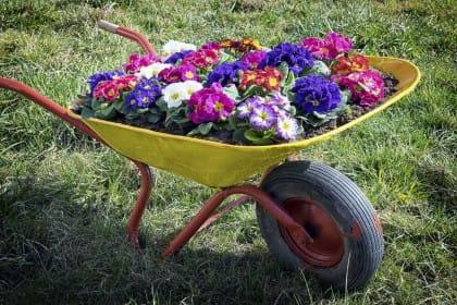Come curare le piante durante le vacanze estive
