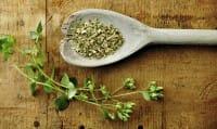 Come coltivare l'origano in vaso o nell'orto, una pianta ricca di proprietà importanti