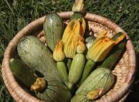 Zucchine dall'orto