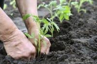 Agosto e settembre nell'orto: cosa seminare, i lavori da fare e le prelibatezze da raccogliere