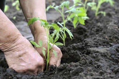 lavori orto agosto e settembre