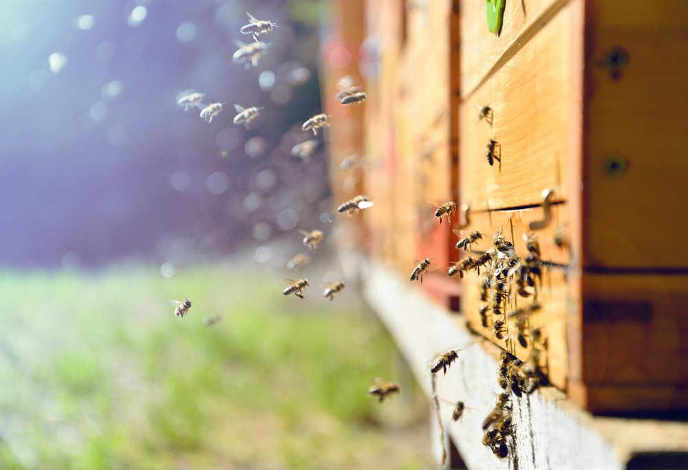 api a rischio