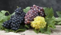 Uva, tanta uva, per avere una pelle più giovane. E anche per disintossicarsi e aiutare l'intestino