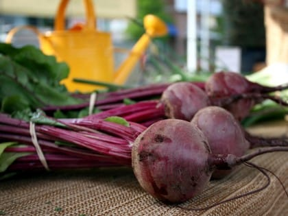 Barbabietola: un alimento ideale per chi soffre di anemia