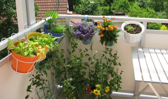 L'orto sul balcone: il vademecum della coltivazione in poco spazio con tanta resa