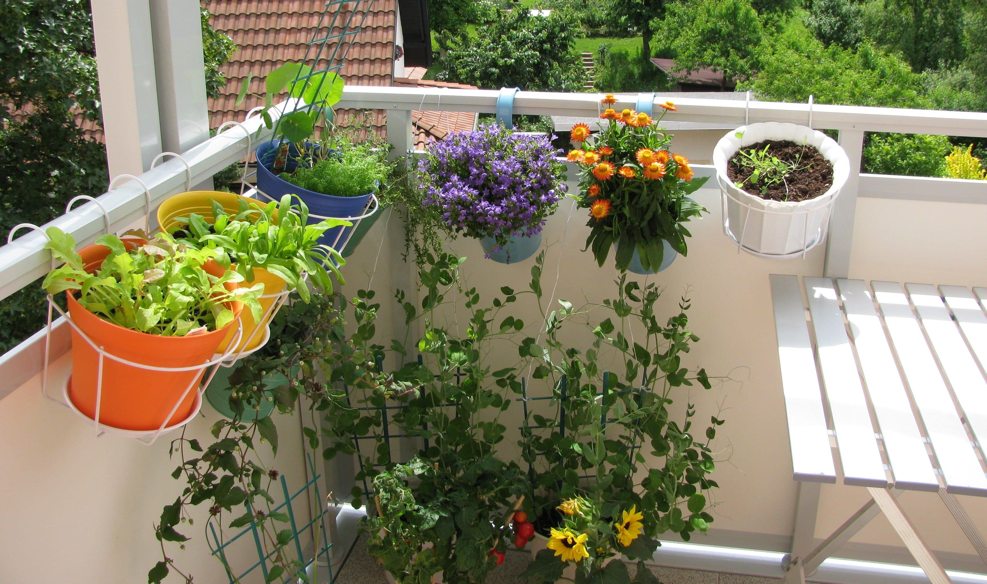 come coltivare l 39 orto in casa non specare. Black Bedroom Furniture Sets. Home Design Ideas