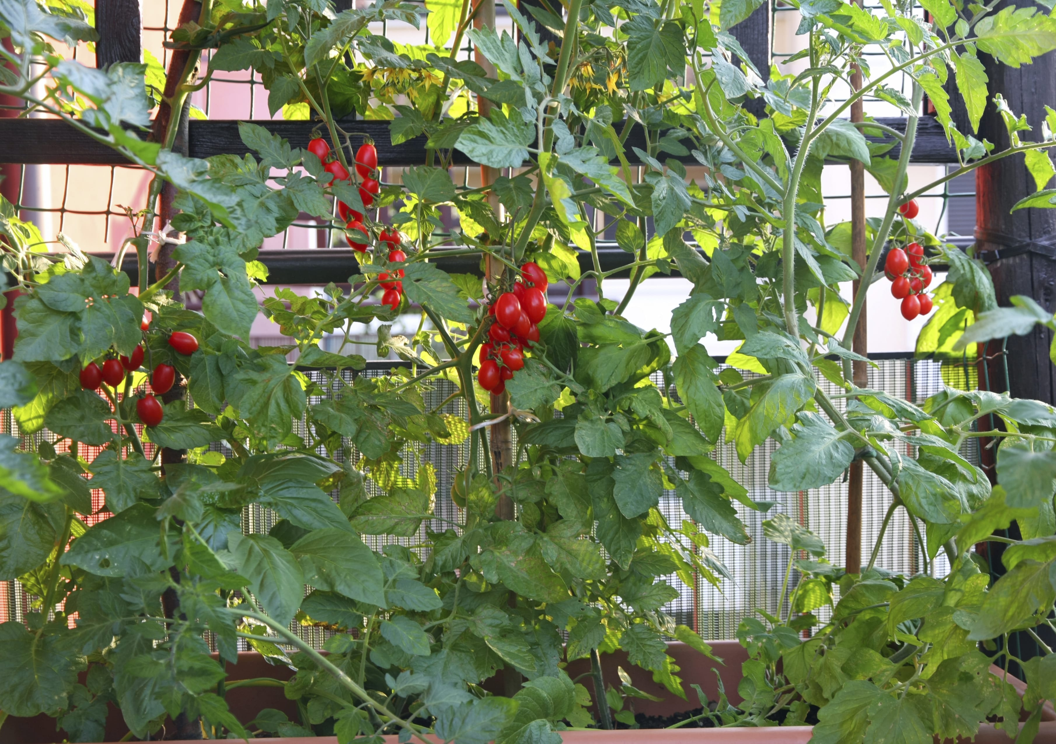 Come metter su il tuo orto da balcone