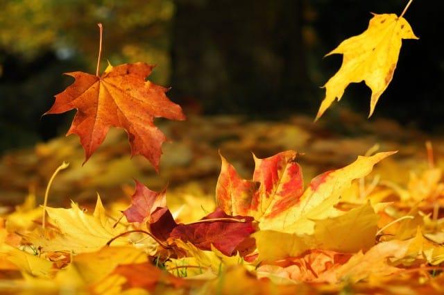 Come riutilizzare le foglie autunnali per decorare casa e per la cura del giardino e dell'orto