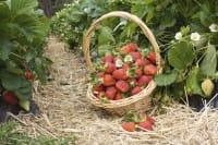 frutta-e-verdura-le-proprieta-e-i-benefici-per-la-salute-in-base-al-colore (13)