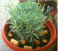 Tappi di sughero come fertilizzanti naturali