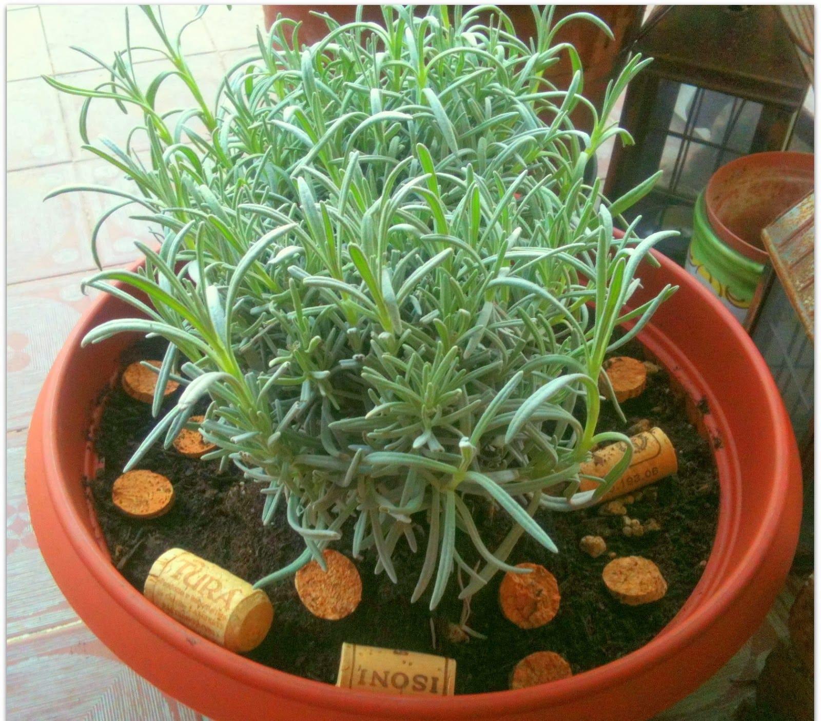 Riciclo creativo tappi di sughero tante idee curiose - Le piante grasse si possono tenere in casa ...
