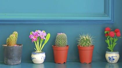 Come combattere l'inquinamento domestico e atmosferico, anche con le piante giuste