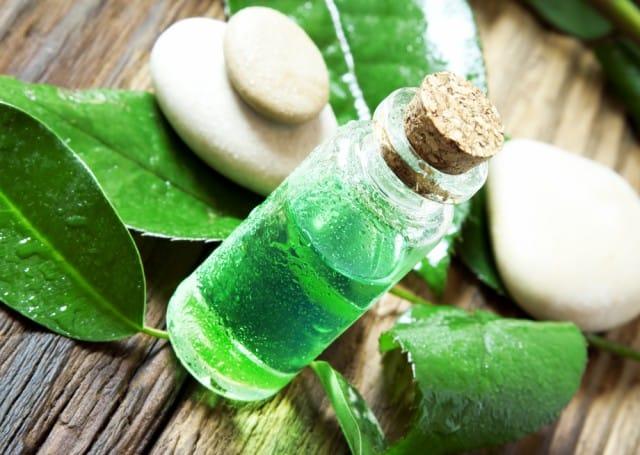 Tea Tree oil: gli effetti benefici per la salute e come utilizzarlo per le pulizie di casa