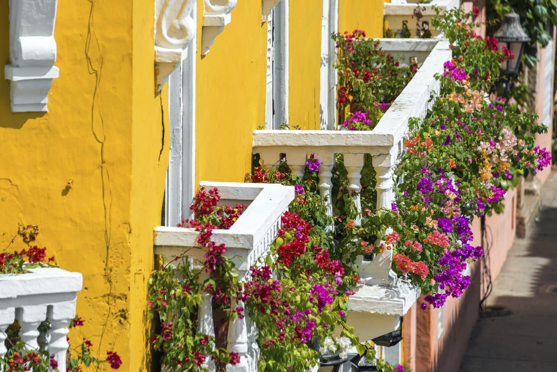 Come arredare il balcone con i fiori non sprecare for Fiori e piante da balcone