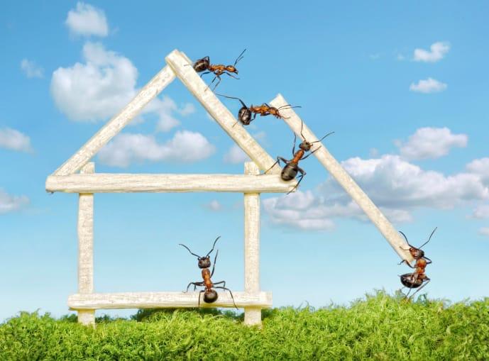 Trucchi per combattere le formiche orsomarso blues - Rimedi per le formiche in casa ...