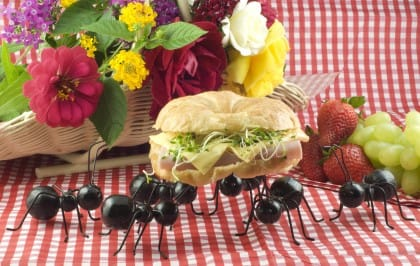 I rimedi naturali contro le formiche