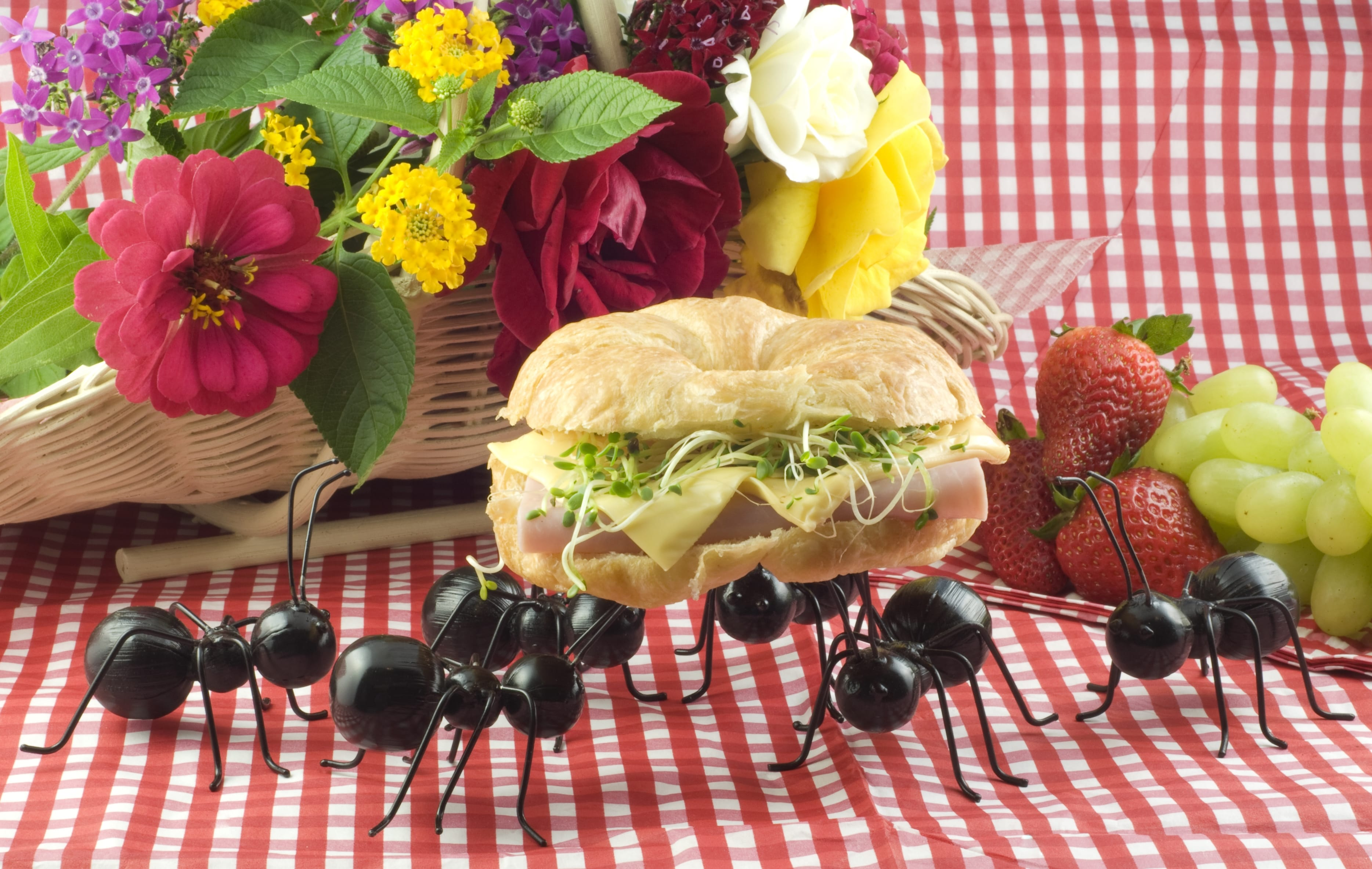 Rimedi naturali contro le formiche non sprecare - Invasione di formiche in cucina ...