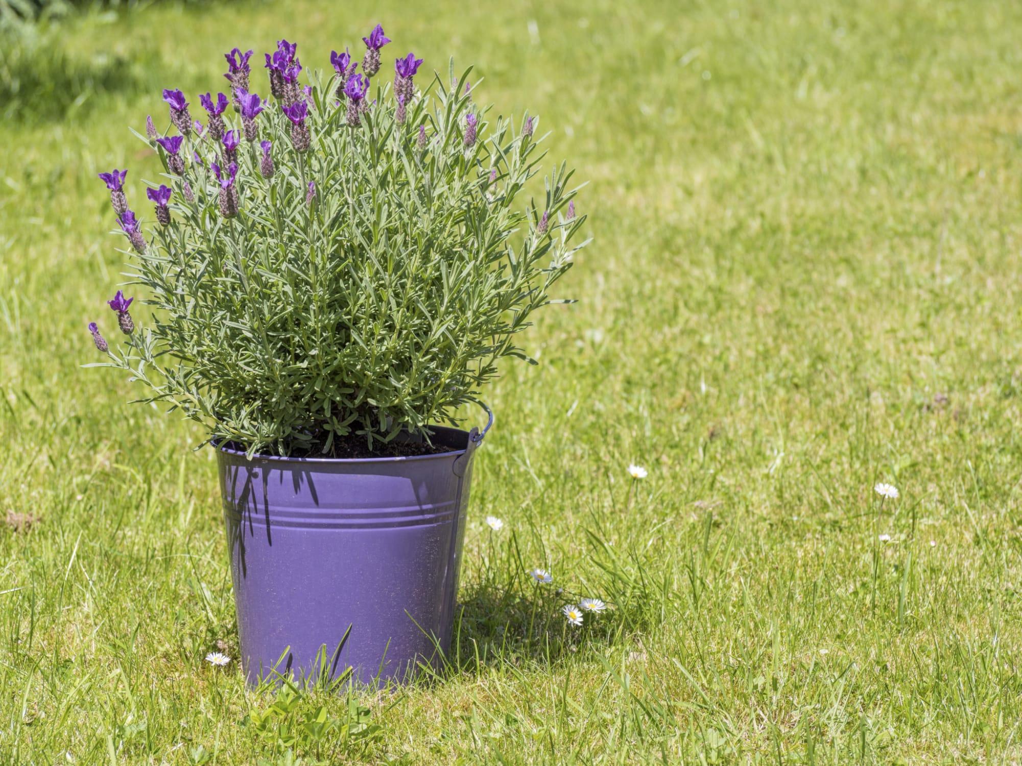 Come eliminare le formiche dalle piante | Coltivazione ...
