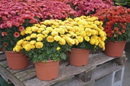 Le piante per tenere lontani insetti vari, mosche, afidi e zanzare