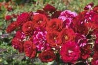Fertilizzanti naturali: i rimedi fai da te per la cura del giardino e dell'orto