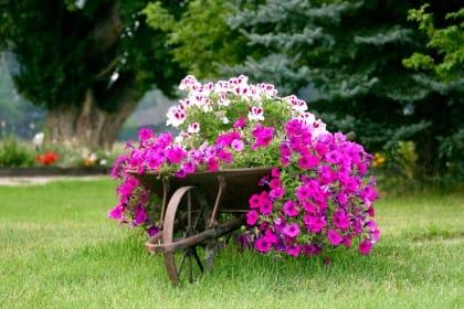 Idee di riciclo creativo per il giardino