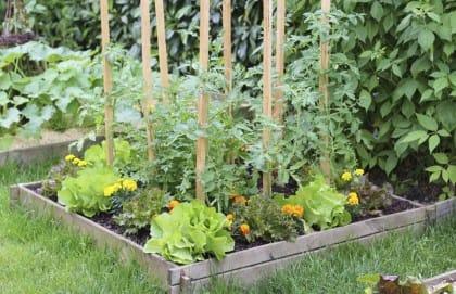 Ortaggi di stagione coltivati nell'orto in giardino