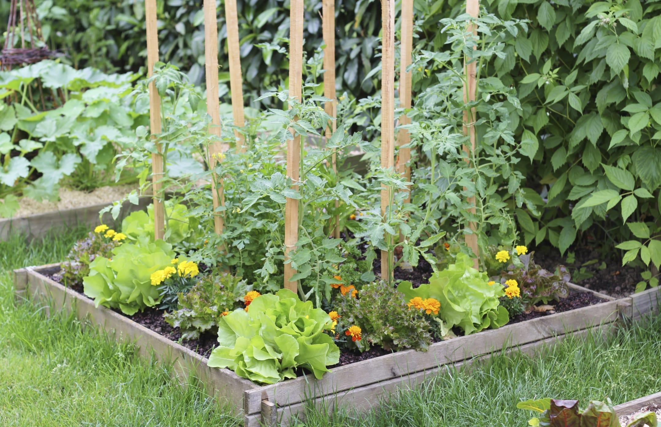Benefici ortoterapia non sprecare for Orto giardino