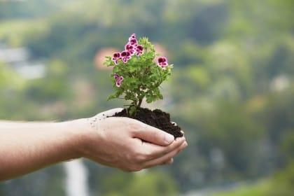 Giornata Mondiale dell'Ambiente 2014