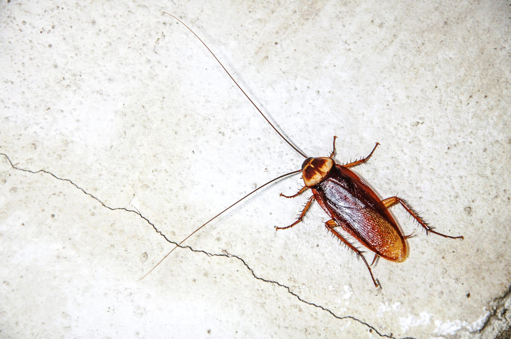 rimedi naturali contro gli scarafaggi in casa non sprecare