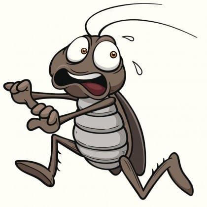 Tutti i rimedi naturali contro gli scarafaggi in casa