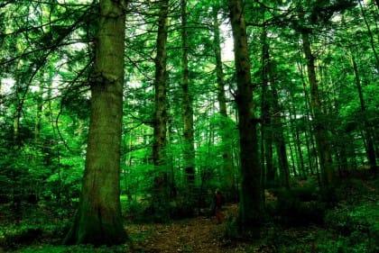 In Calabria lo spreco folle del Comune di Serra San Bruno che taglia gli alberi secolari per pagare debiti