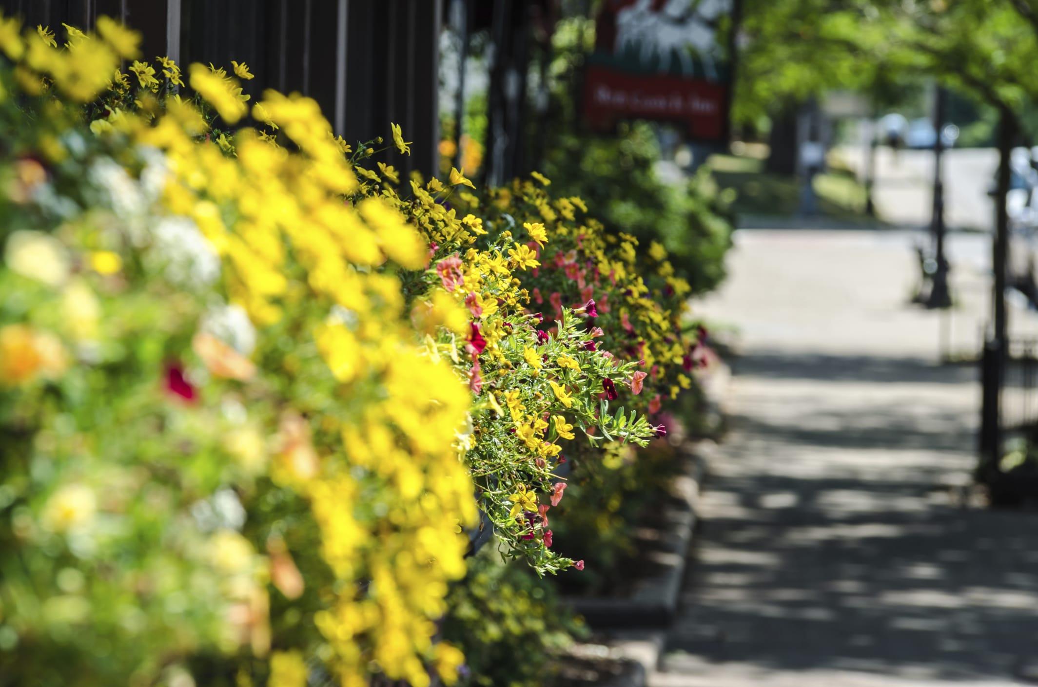 Aiuole fiorite perenni con le graminacee in citt non for Aiuole perenni