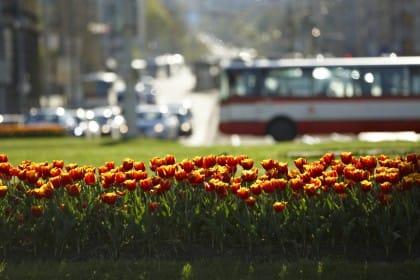 abbellire la città con le aiuole di graminacee fiorite