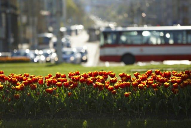 Aiuole fiorite perenni graminacee abbelliscono citta 6 for Aiuole perenni