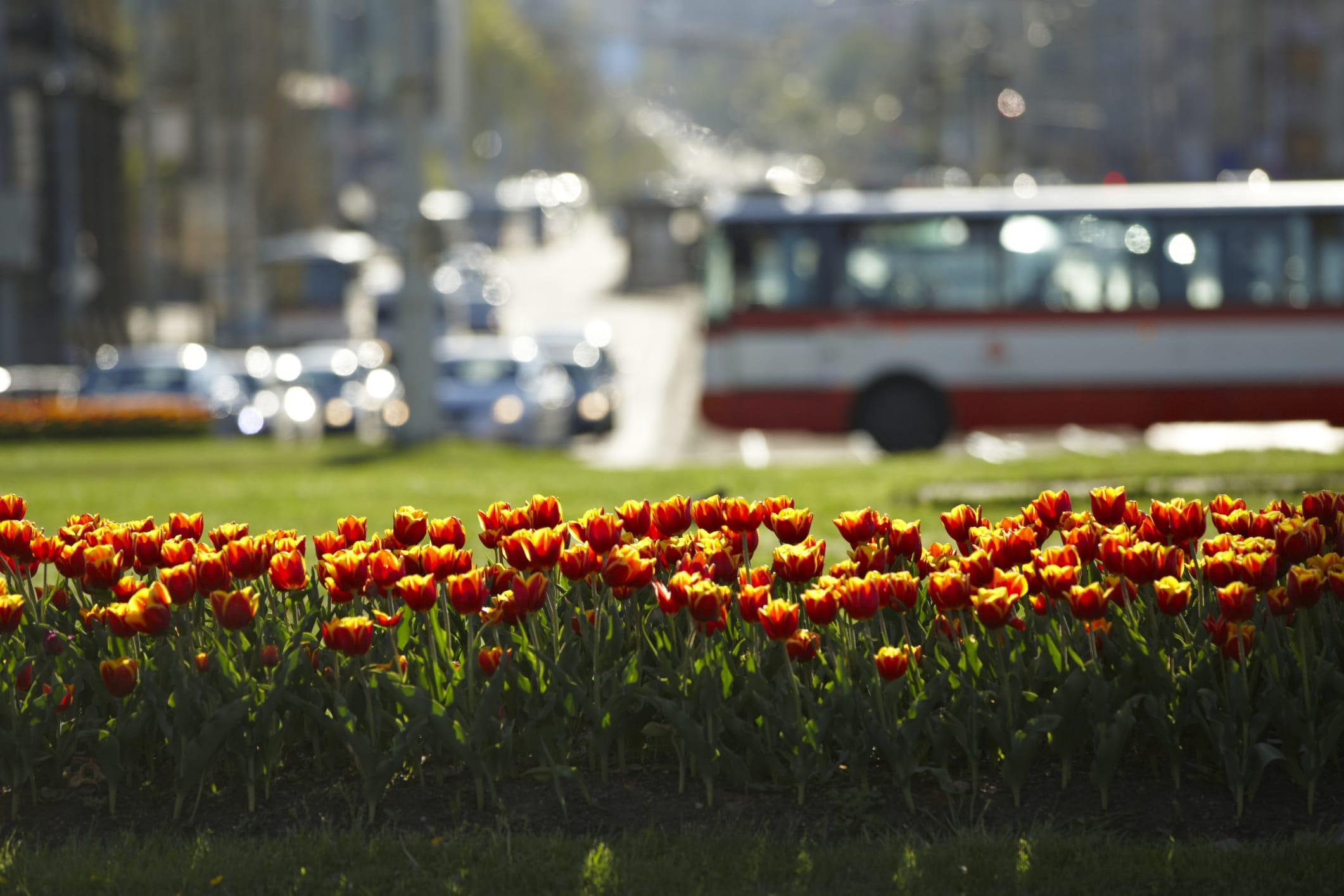 Aiuole fiorite perenni con le graminacee in citt non for Aiuole fiorite immagini